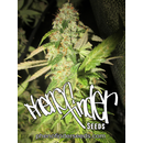 Pheno Finder Seeds, Notorious OG, feminized, 5 pc (OG#18...